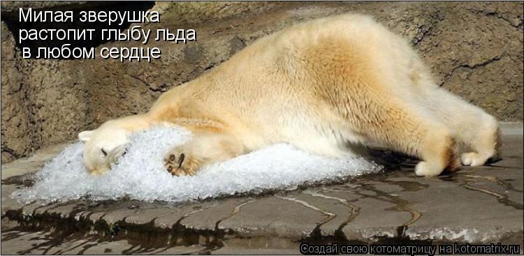 Котоматрица: Милая зверушка растопит глыбу льда в любом сердце