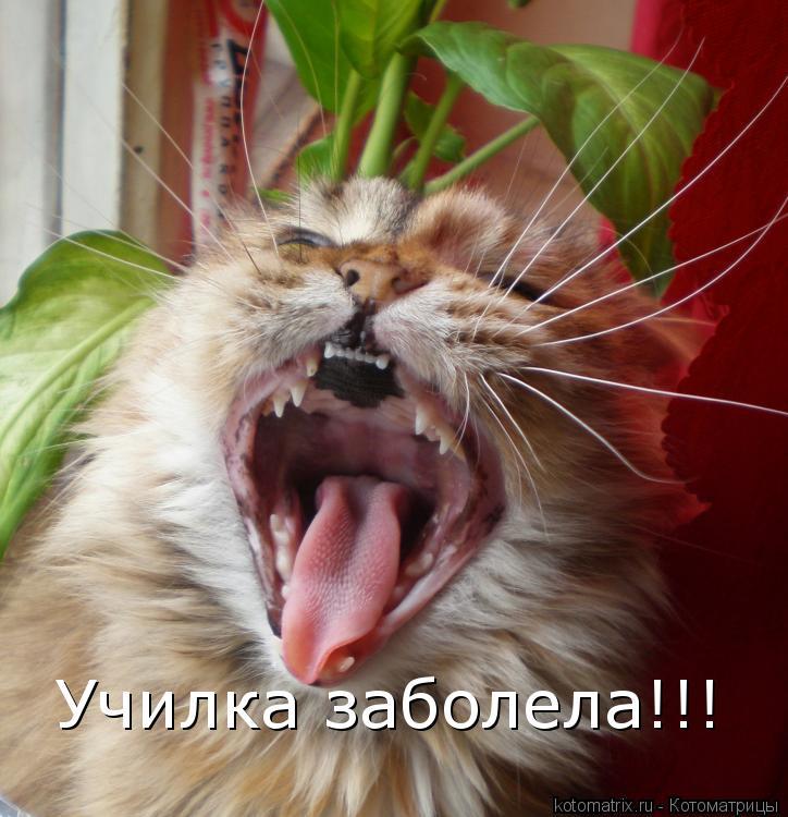 Котоматрица: Училка заболела!!!