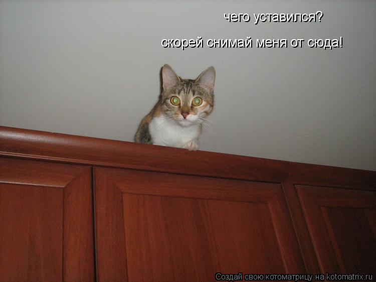 Котоматрица: чего уставился? скорей снимай меня от сюда!
