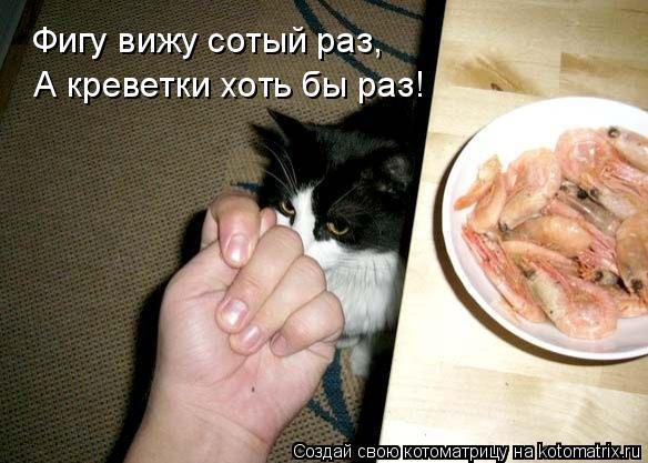 Котоматрица: Фигу вижу сотый раз, А креветки хоть бы раз!