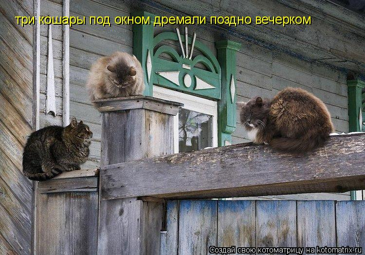 Котоматрица: три кошары под окном дремали поздно вечерком