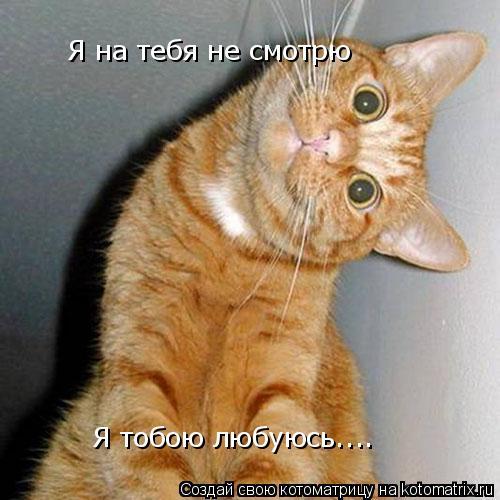 Котоматрица: Я на тебя не смотрю Я тобою любуюсь....