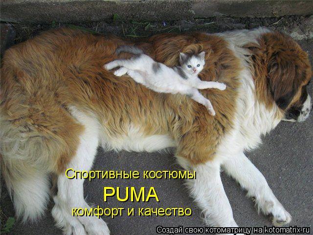 Котоматрица: Спортивные костюмы PUMA комфорт и качество