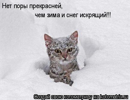 Котоматрица: чем зима и снег искрящий!!! Нет поры прекрасней,