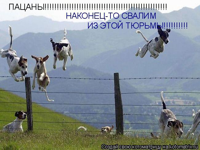 Котоматрица: ПАЦАНЫ!!!!!!!!!!!!!!!!!!!!!!!!!!!!!!!!!!!!!!!!!!!!!!!!!! НАКОНЕЦ-ТО СВАЛИМ ИЗ ЭТОЙ ТЮРЬМЫ!!!!!!!!!!