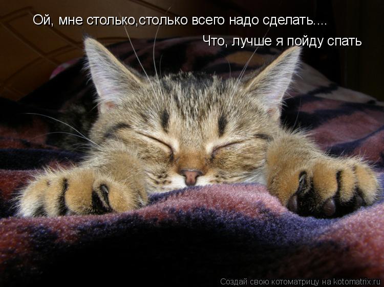 Котоматрица: Ой, мне столько,столько всего надо сделать.... Что, лучше я пойду спать