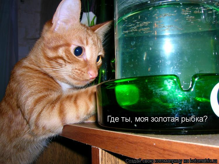 Котоматрица: Где ты, моя золотая рыбка?