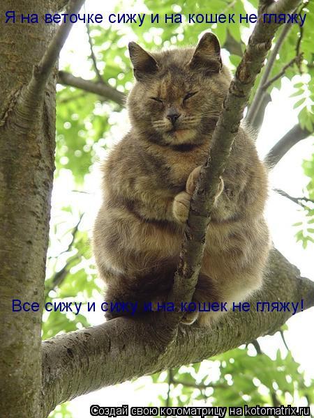 Котоматрица: Я на веточке сижу и на кошек не гляжу Все сижу и сижу и на кошек не гляжу!