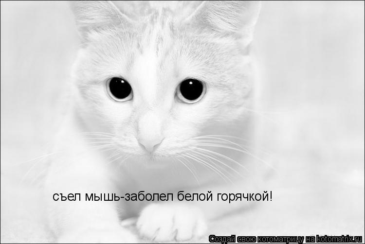 Котоматрица: съел мышь-заболел белой горячкой!