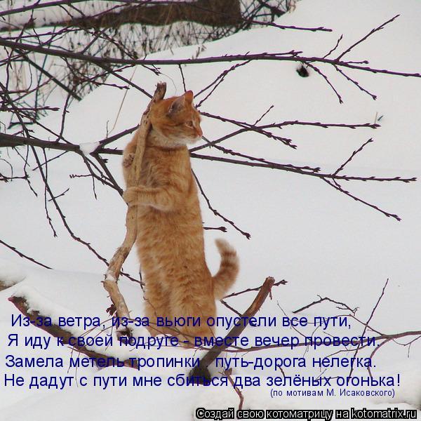 Котоматрица: Из-за ветра, из-за вьюги опустели все пути, Я иду к своей подруге - вместе вечер провести. Замела метель тропинки – путь-дорога нелегка. Не да