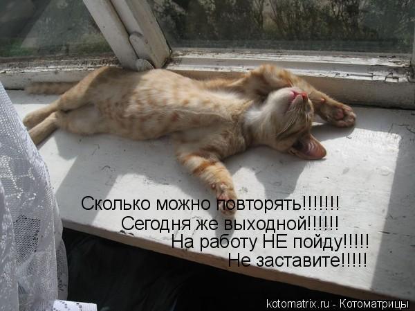 Котоматрица: Сколько можно повторять!!!!!!! Сегодня же выходной!!!!!! На работу НЕ пойду!!!!! Не заставите!!!!!