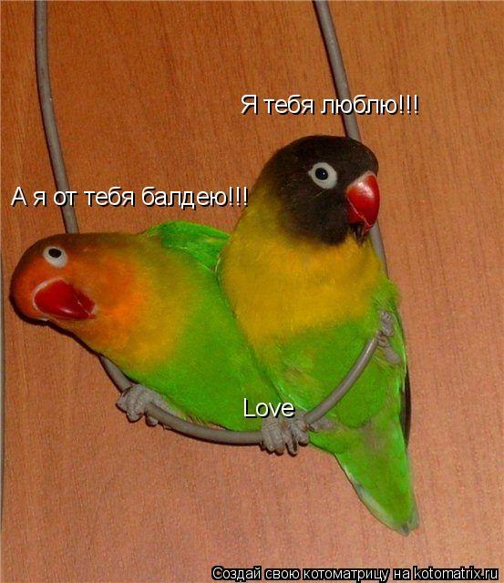 Котоматрица: Я тебя люблю!!! А я от тебя балдею!!! Love