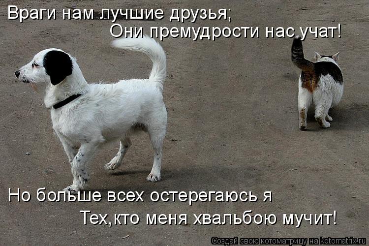 Котоматрица: Враги нам лучшие друзья; Они премудрости нас учат! Но больше всех остерегаюсь я Тех,кто меня хвальбою мучит!