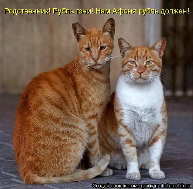 Котоматрица: Родственник! Рубль гони! Нам Афоня рубль должен!