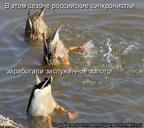 Котоматрица: В этом сезоне российские синхронистки заработали заслуженное золото!