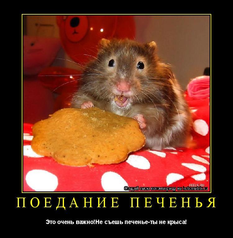 Котоматрица: ПОЕДАНИЕ ПЕЧЕНЬЯ Это очень важно!Не съешь печенье-ты не крыса!