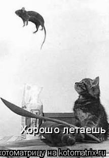 Котоматрица: Хорошо летаешь