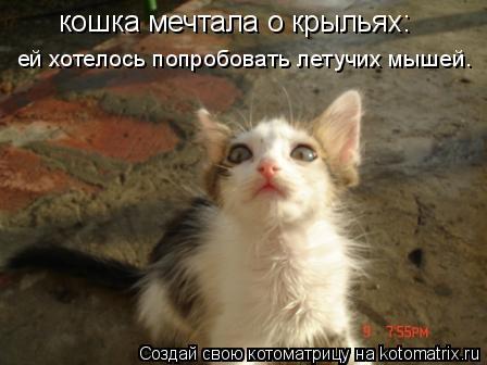 Котоматрица: кошка мечтала о крыльях: ей хотелось попробовать летучих мышей.