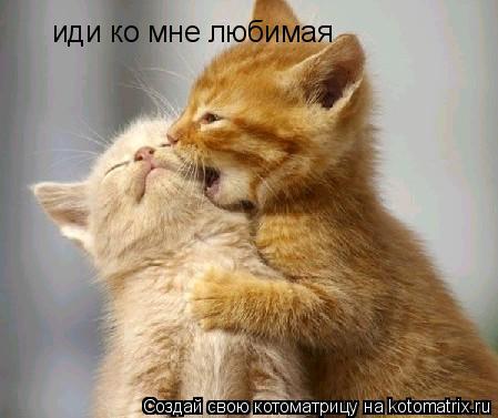 Котоматрица: иди ко мне любимая иди ко мне любимая