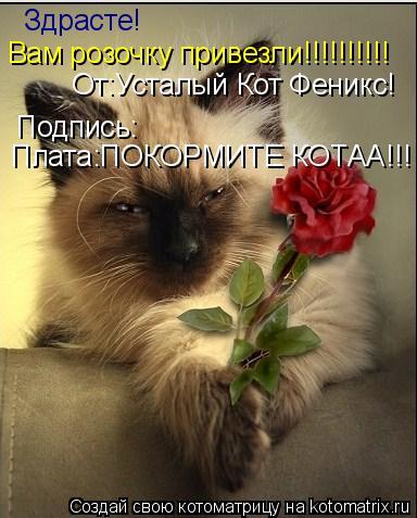 Котоматрица: Здрасте! Вам розочку привезли!!!!!!!!!! От:Усталый Кот Феникс! Подпись: Плата:ПОКОРМИТЕ КОТАА!!!