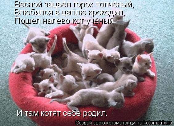 Котоматрица: Весной зацвёл горох толчёный, Влюбился в цаплю крокодил, Пошел налево кот учёный И там котят себе родил.