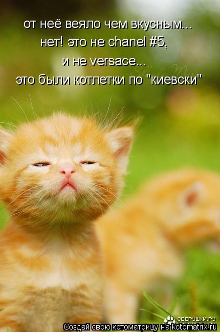 """Котоматрица: от неё веяло чем вкусным... нет! это не chanel #5, и не versace... это были котлетки по """"киевски"""""""