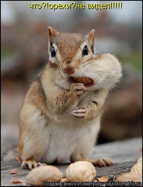 Котоматрица: что?!орехи?не видел!!!!!