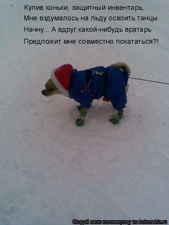 Котоматрица: Купив коньки, защитный инвентарь, Мне вздумалось на льду освоить танцы. Начну... А вдруг какой-нибудь вратарь Предложит мне совместно поката