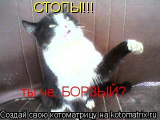 Котоматрица: СТОПЫ!!! ты че, БОРЗЫЙ?