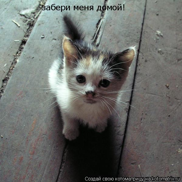Котоматрица: забери меня домой!