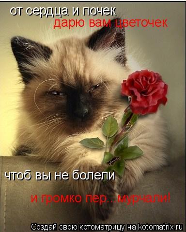 Котоматрица: от сердца и почек дарю вам цветочек чтоб вы не болели и громко пер...мурчали!
