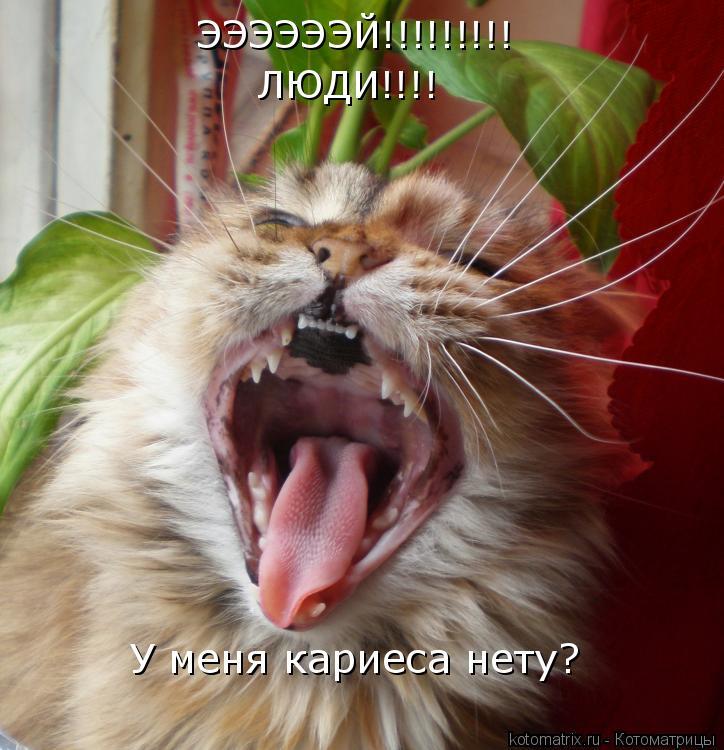 Котоматрица: ЭЭЭЭЭЭЙ!!!!!!!!! ЛЮДИ!!!! У меня кариеса нету?