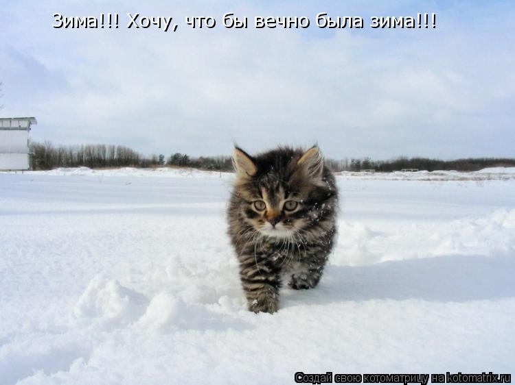 Котоматрица: Зима!!! Хочу, что бы вечно была зима!!!