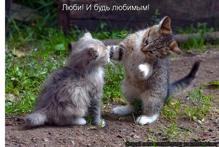 Котоматрица: Люби! И будь любимым!