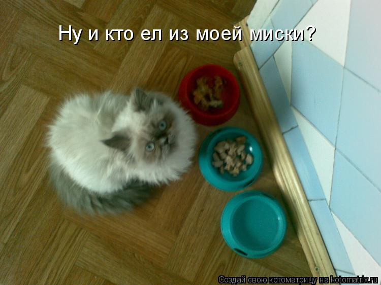 Котоматрица: Ну и кто ел из моей миски?