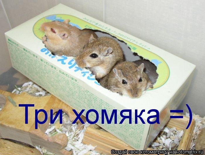 Котоматрица: Три хомяка =)