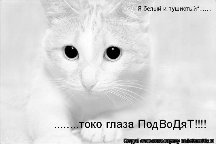 Котоматрица: Я белый и пушистый*....... ........токо глаза ПодВоДяТ!!!!