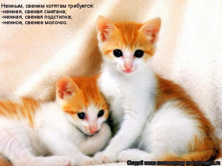 Котоматрица: Нежным, свежим котятам требуется: -нежная, свежая сметана; -нежная, свежая подстилка; -нежное, свежее молочко.