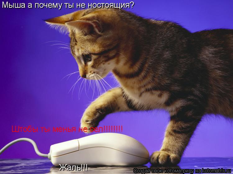 Котоматрица: Мыша а почему ты не ностоящия? Штобы ты менья не сел!!!!!!!! Жаль!!!