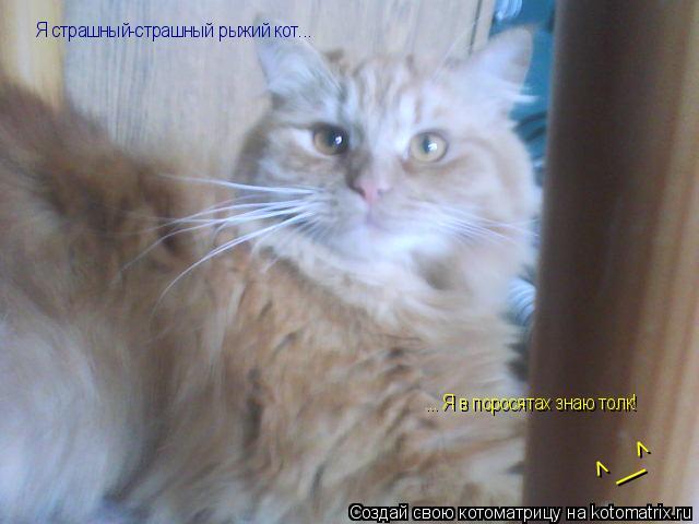 Котоматрица: Я страшный-страшный рыжий кот... ... Я в поросятах знаю толк! ^__^