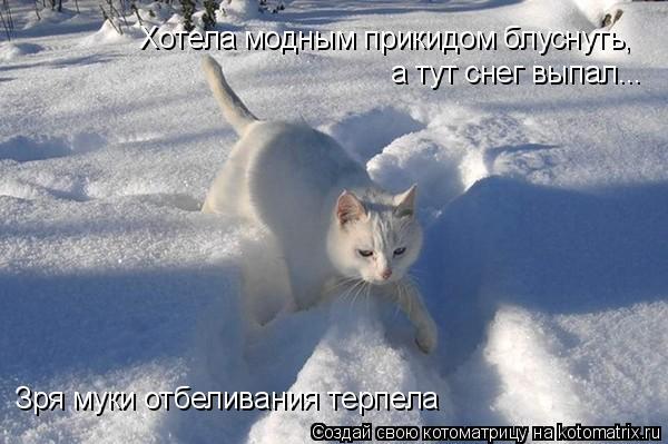 Котоматрица: Зря муки отбеливания терпела Хотела модным прикидом блуснуть,  а тут снег выпал...