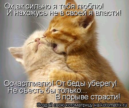 Котоматрица: Ох,ак сильно я тебя люблю! И нахожусь не в своей я власти! Осчастливлю! От беды уберегу! Не съесть бы только...  В порыве страсти!