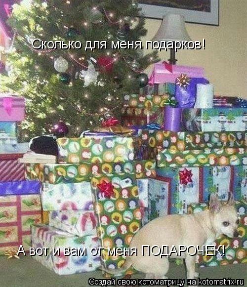 Котоматрица: Сколько для меня подарков! Сколько для меня подарков! А вот и вам от меня ПОДАРОЧЕК!