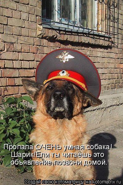 Котоматрица: объявление,позвони домой. Шарик!Ели ты читаешь это Пропала ОЧЕНЬ умная собака!