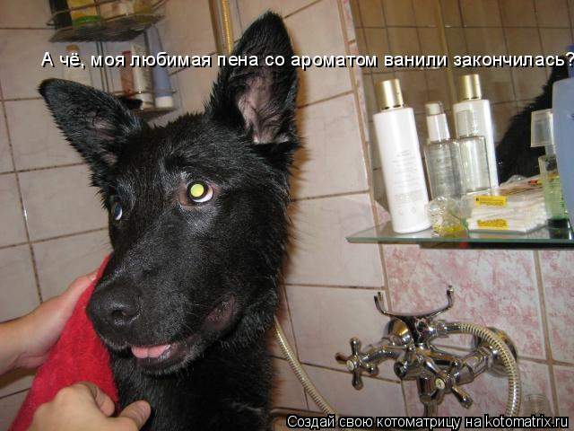 Котоматрица: А чё, моя любимая пена со ароматом ванили закончилась?