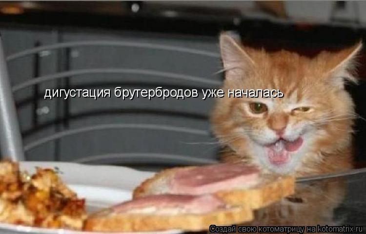 Котоматрица: дигустация брутербродов уже началась
