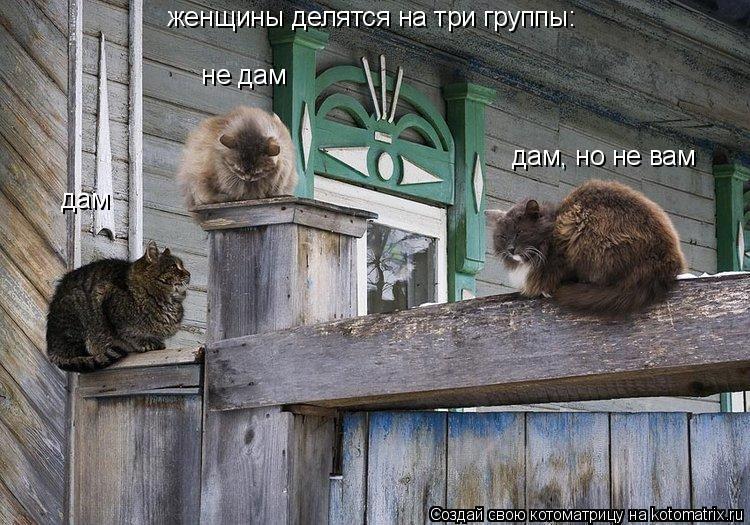 Котоматрица: женщины делятся на три группы: дам  не дам  дам, но не вам