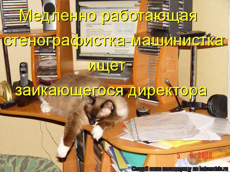Котоматрица: Медленно работающая  стенографистка-машинистка ищет заикающегося директора