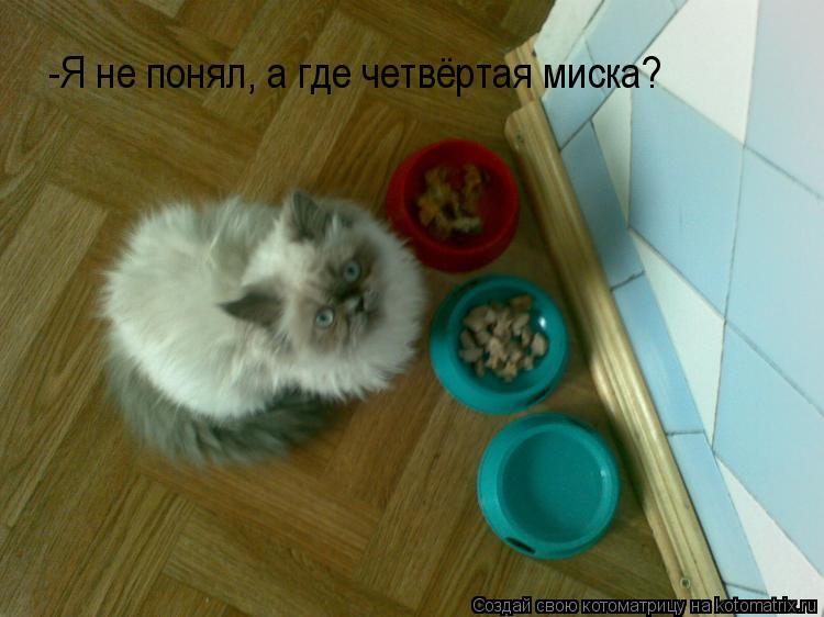 Котоматрица: -Я не понял, а где четвёртая миска?