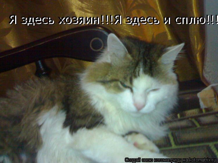 Котоматрица: Я здесь хозяин!!!Я здесь и сплю!!! Я здесь хозяин!!!Я здесь и сплю!!!